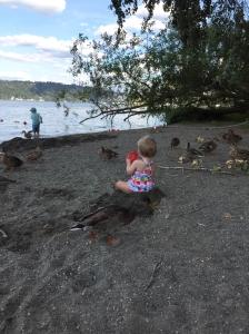 37beach-ducks