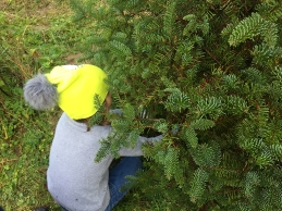 Laine cutting the tree.