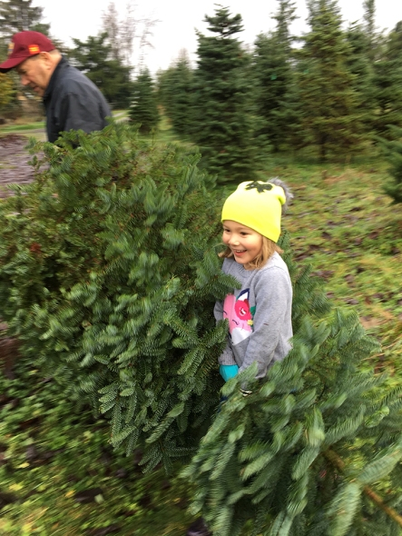 Laine wanted to help carry the tree.