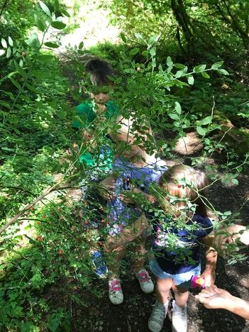 swamp-trail-070618-23