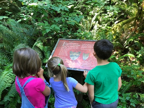 swamp-trail-070618-28