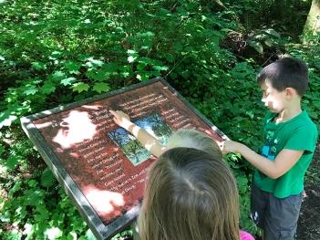 swamp-trail-070618-39