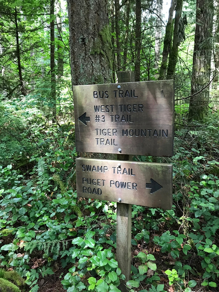swamp-trail-070618-72